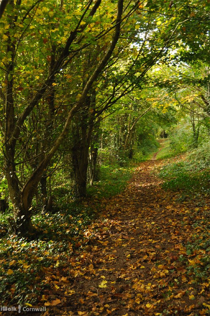Woodland Path at St Kew, Cornwall