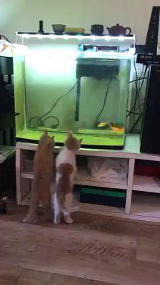Sie haben jetzt ihren eigenen Fernseher   – Tiere