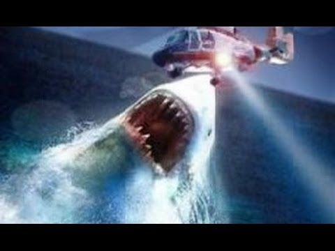 Real Megalodon Sightings!! Megalodons (Biggest Sharks) Exist - YouTube