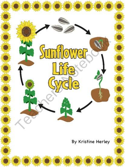Sunflower Life Cycle from Kristine's Classroom Creations on TeachersNotebook.com -  (12 pages)  - Includes nine sunflower life cycle activities.