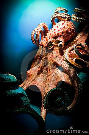 Scary Giant Octopus                                                                                                                                                                                 More
