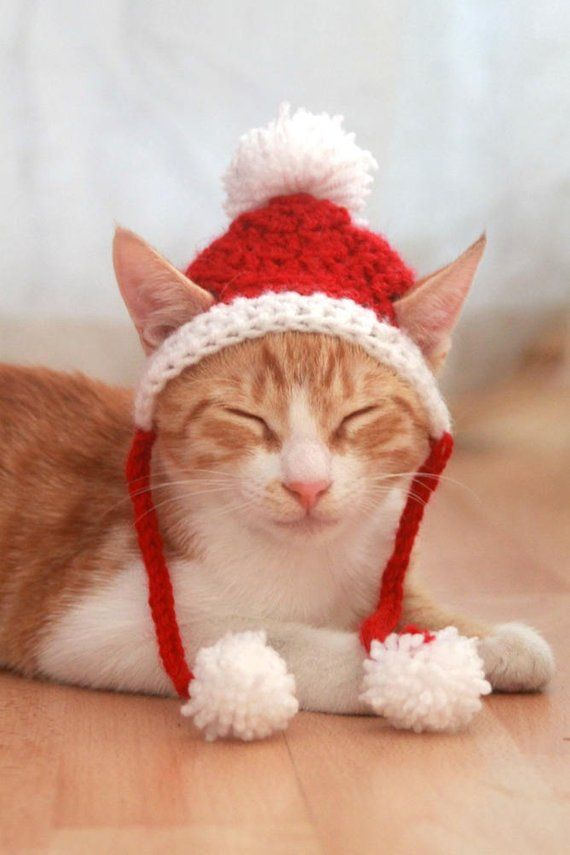 Santa Cat Hat Crochet Pattern Fun And Festive Christmas Etsy Cat Hat Pattern Crochet Cat Hat Christmas Cats