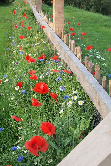 beautiful wildflowers poppies daisies along fence line - Garden Ideas Along Fence Line