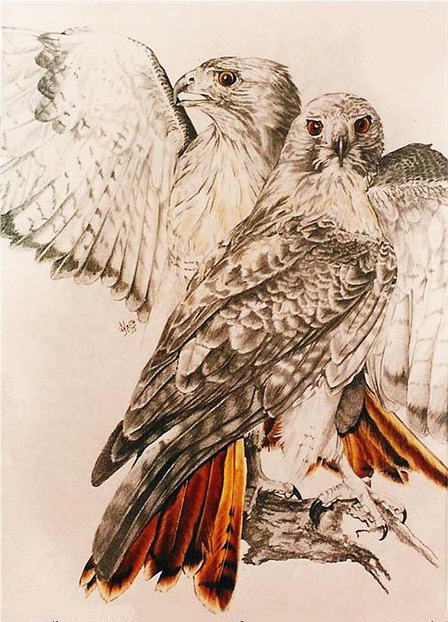 Хищные птицы картинки нарисованные
