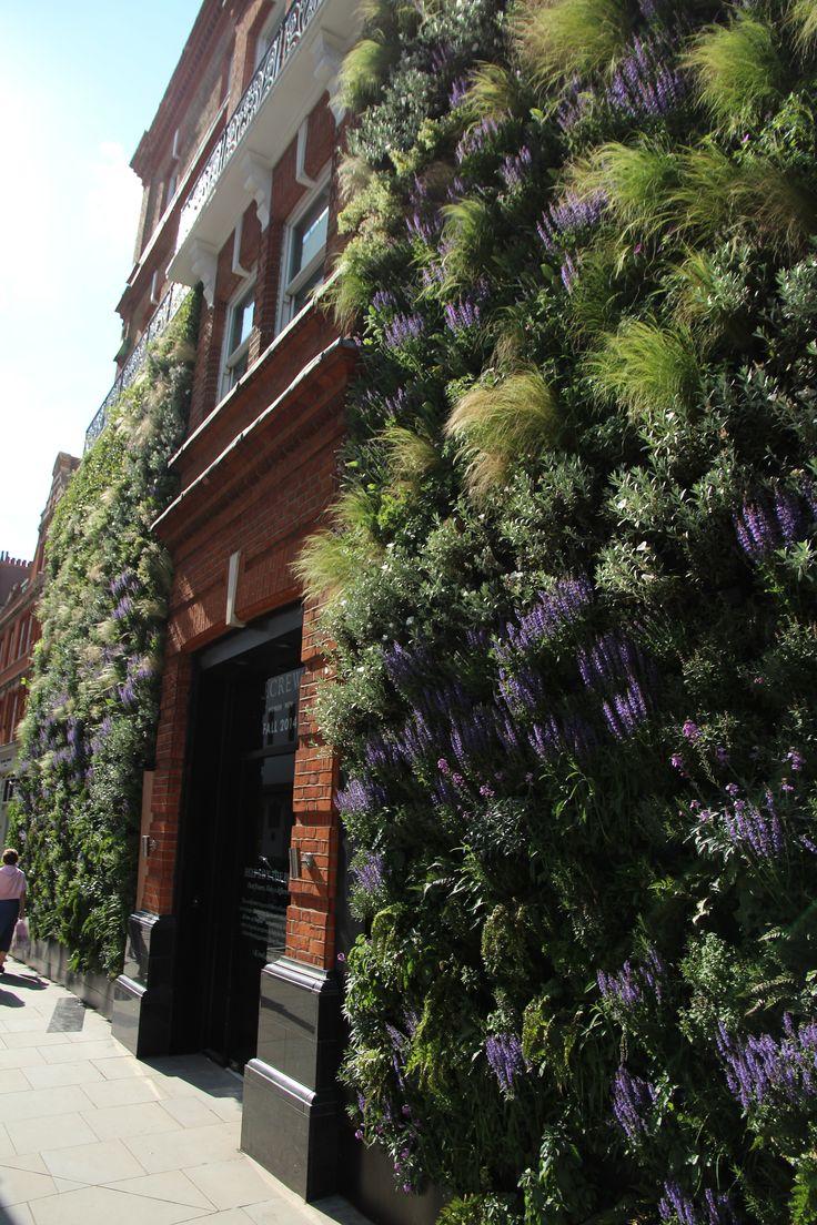 Een indrukwekkende groene en bloeiende plantenwand in Londen, met siergras (Stipa tenuifolia, vedergras) en Salvia nemorosa.