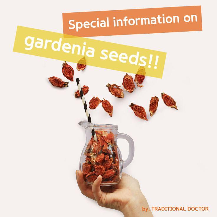 Special information on gardenia seeds!!