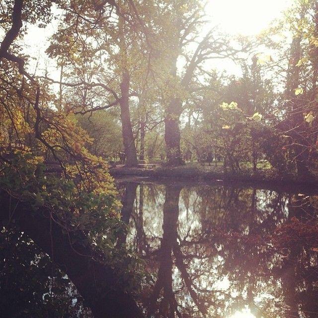 Sárvári Arborétumban mindig jól esik egy séta. #nature #wellness #lake #tree Sárvár