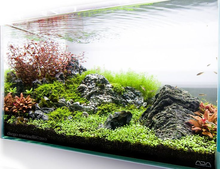 Pin by mr crystal revelation on beauty out of the blue for Aquarium 50l