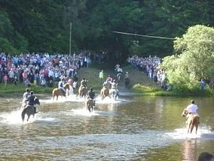 Skills of horsemanship are kept alive in the Borders: fording the Tweed on Braw Lad's Day, Galashiels 2011