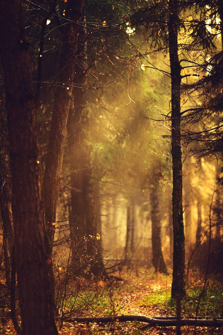 rays of sunshine... by Anastasia Krylova on 500px