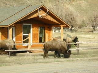 #29 Gardiner Cabin Rental: Electric Peak Cabin At Yellowstone Park | HomeAway