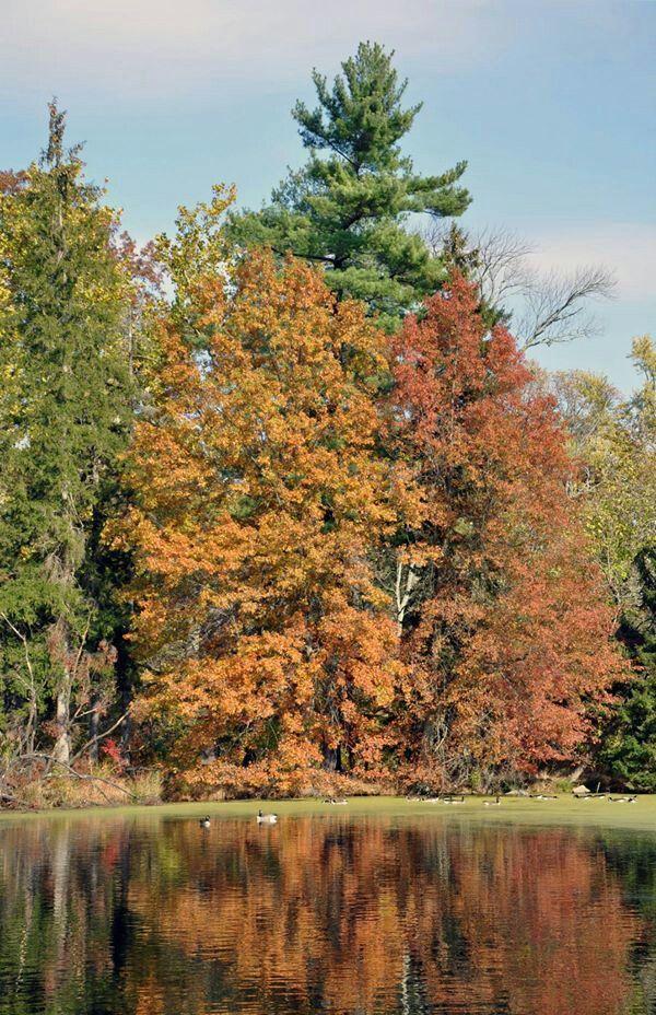 22 best Duke Farms, Hillsborough, NJ images on Pinterest | Duke ...