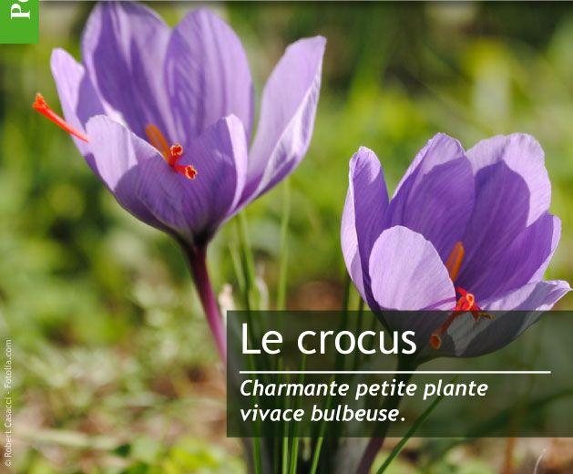 Magazine Petit Jardin N°107 - Novembre 2015 - Jardinage, plantes et fleurs