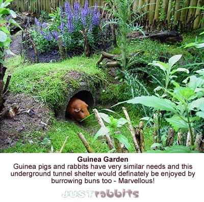 Designed with Guinea pigs in mind I know but this underground tunnel garden would be really enjoyed by bunny rabbits too.