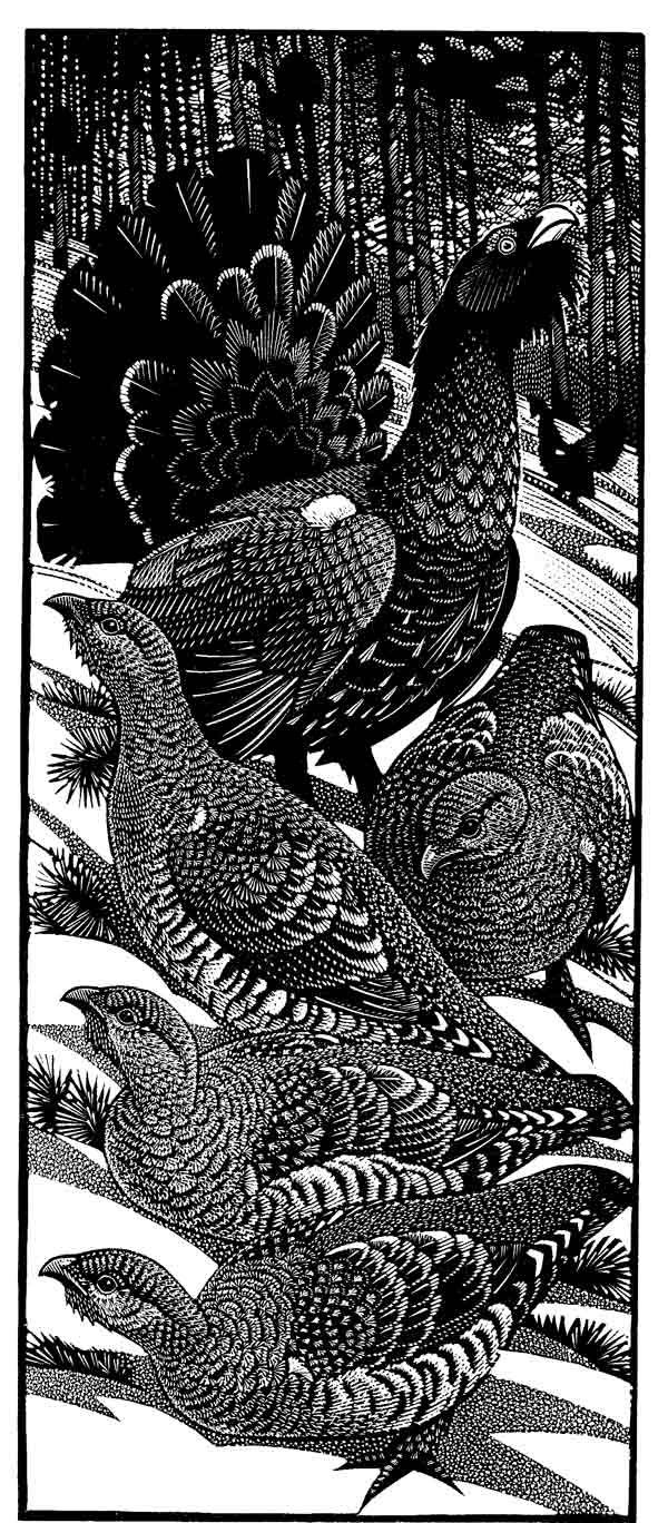 Engraving/ Europe  Colin See-Paynton - Wood Engraving