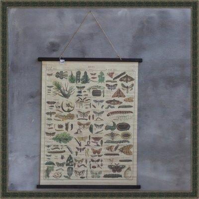 schoolkaart-natuur-mountains-more