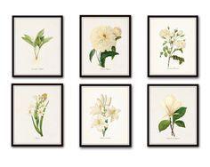 Redoute White Botanical Print Set No. 6 - Canvas Art Prints