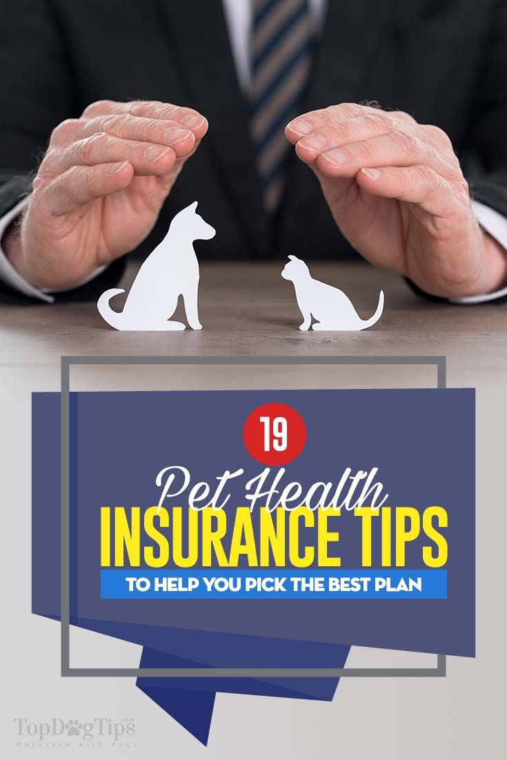 Infographic 19 Tips To Help You Pick The Best Pet Insurance Plan Coverage Best Pet Insurance Pet Health Pet Insurance