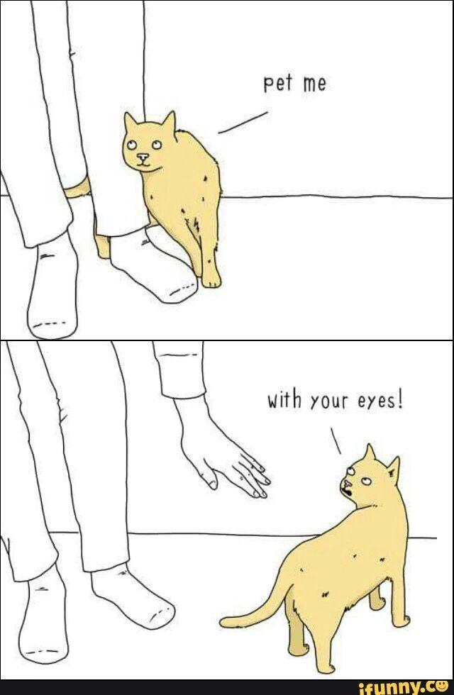 256e41c6139b56d71a81adde939bb402 animal memes funny animal 231 best cat logic images on pinterest kitty cats, cute kittens