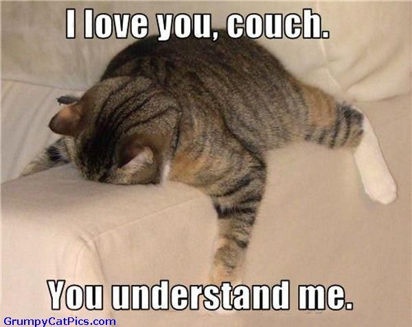 Cute Cat Pictures With Captions | Cute Cat Love For The Couch - Funny Cats Pictures With Captions