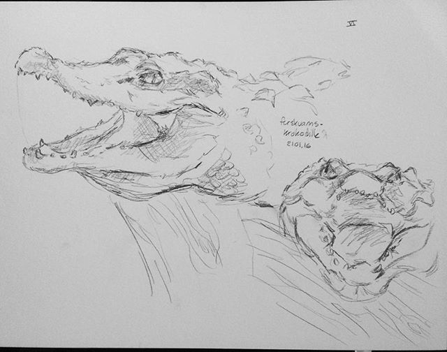 At the aquarium I also Sketched this guy. I really liked sketching crocodiles since they were posing for me xD #crocodile #reptile #akvarietibergen #art #traditional #sketch