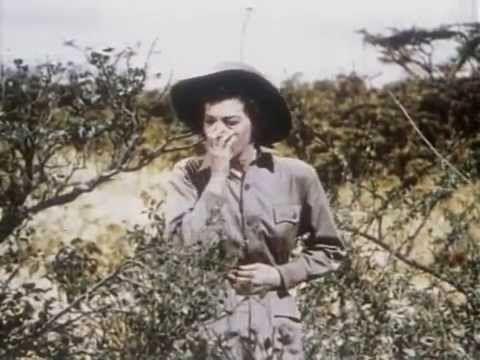 A Kilimandzsaro hava 1952 TELJES FILM