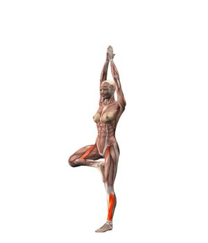 #VRIKSHANASA Tree pose on left foot | YOGA.com