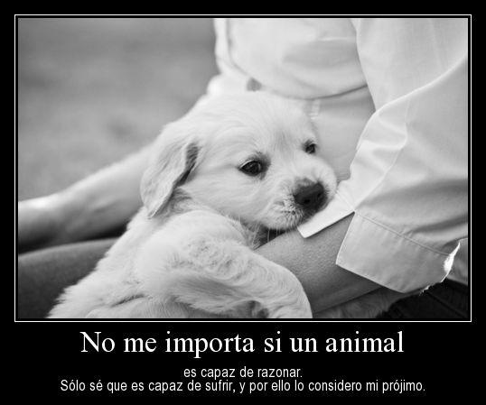 Imágenes para el Día del Animal                                                                                                                                                                                 Más