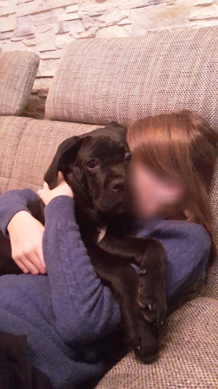 Gina Cora Knuddel Hund Cane Corso Hunde Connor