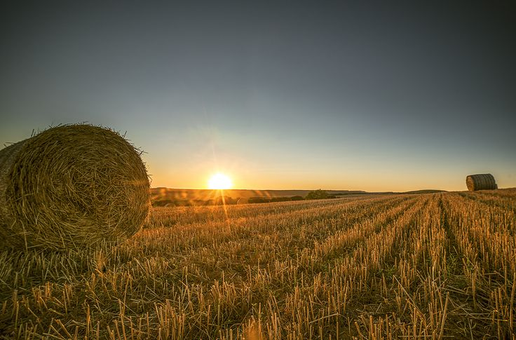 Summer crops are on the way giving beautiful golden colors at the sunset.