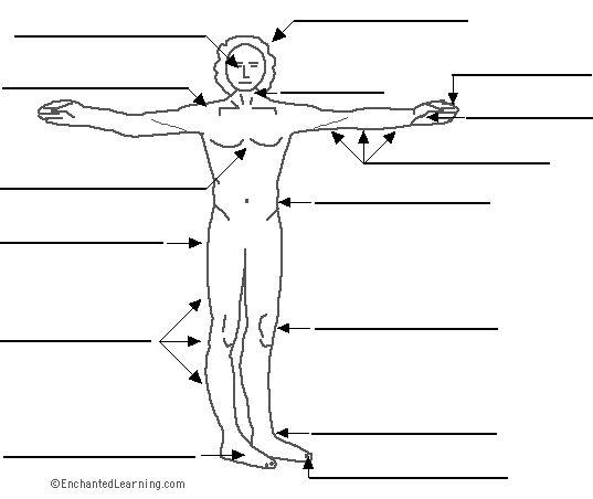 Label the Body (El Cuerpo) in Spanish Printout