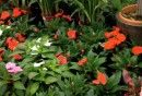 I fiori per un giardino all'ombra coloratissimo! | I sempreverdi