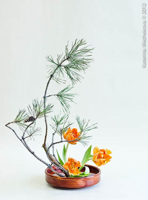 Tulips & pine, from winter to spring