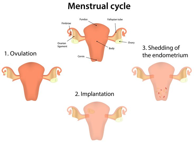 Menstrual Cycle and preventing cramps
