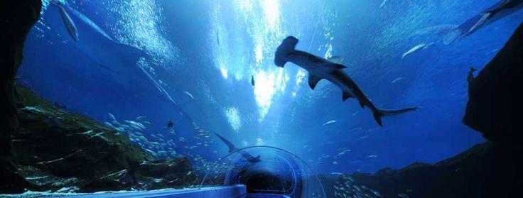 17 Best Images About Georgia Aquarium On Pinterest Whale
