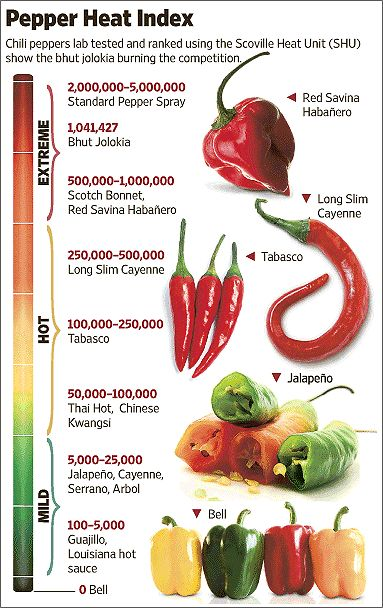 Hot Chili Peppers - the bhut jokokia pepper has been named the hottest pepper in the world, and science explains why people love the heat (it sends the body into a panic, giving a natural high!)