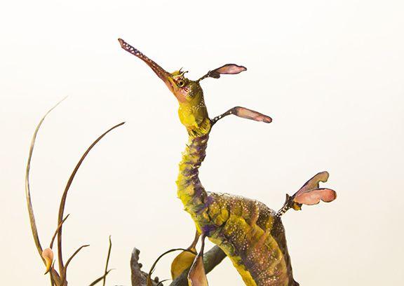Best ArtAmazing Clay Fantasy Animals By Ellen Jewett Images - Surreal animal plant sculptures ellen jewett