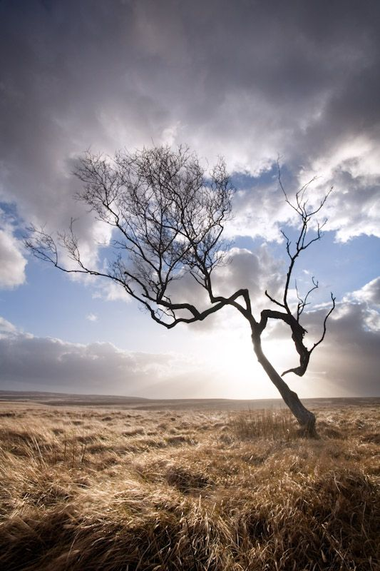 Birch tree silhouette, Big Moor - Fran Halsall