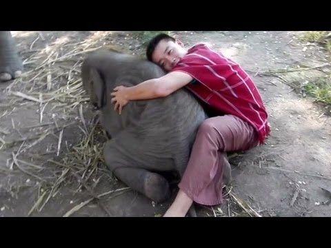 Elephants Love to Cuddle