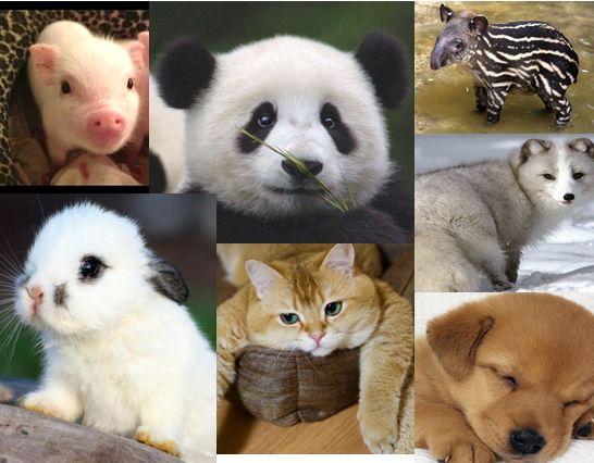 Kumpulan Nama Mamalia (Hewan Menyusui) Dalam Bahasa Inggris Dan Artinya - http://www.ilmubahasainggris.com/kumpulan-nama-mamalia-hewan-menyusui-dalam-bahasa-inggris-dan-artinya/
