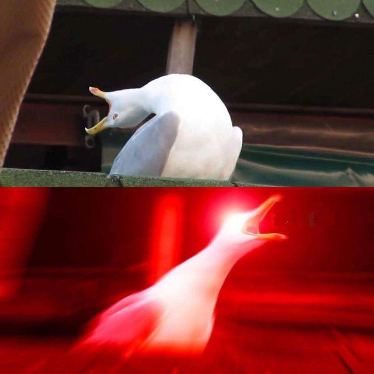 Inhaling Seagull Blank Meme Template Meme Einatmen Von Seagull Blank Meme Template Memes Lustig Template