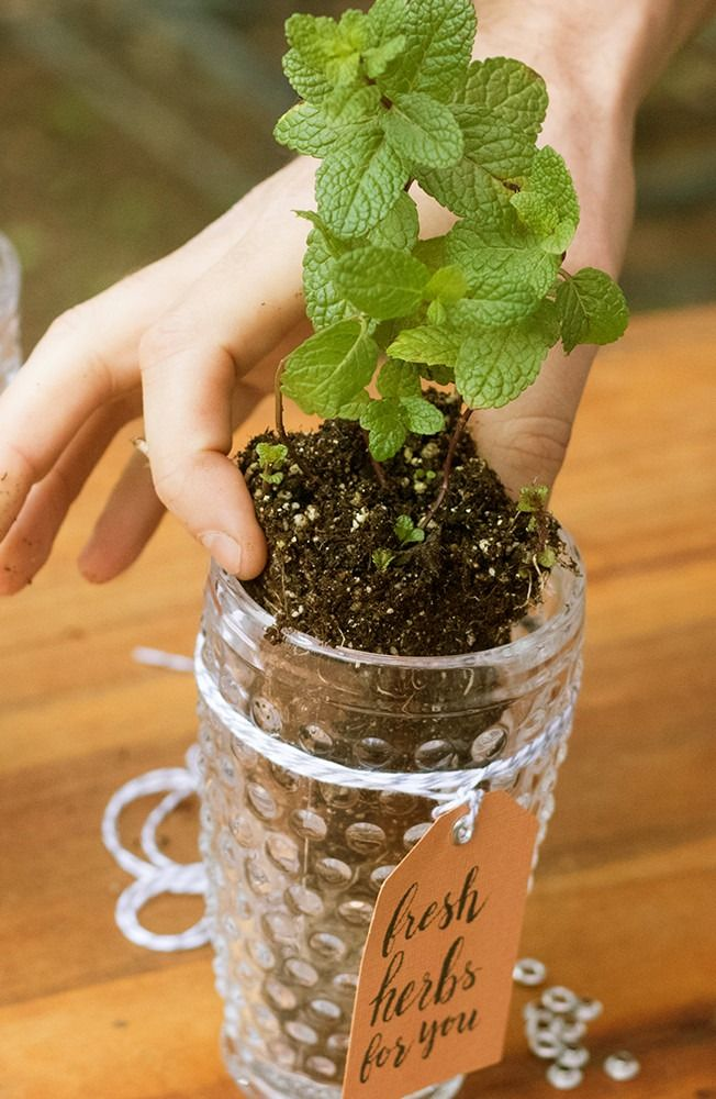 Leave your guests with a piece of your party and show off your green thumb. We love these fresh herb party favors that can double as centerpieces, table settings or place cards.