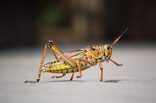 THE GRASSHOPPER SYNDROME - A tale of liberty