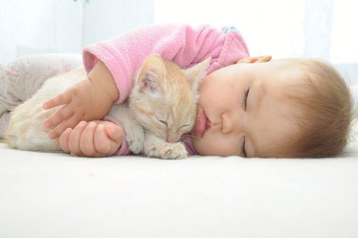 Halte aux idées reçues : quand on a un chat et qu'on accueille un bébé ce n'est pas nécessairement dangereux ! On vous le prouve dans cet article...