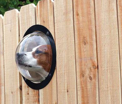 Give your best friend a view of the cat that lives across the road with this Dog Fence Window, alternatively it might also come in handy for scaring away ..