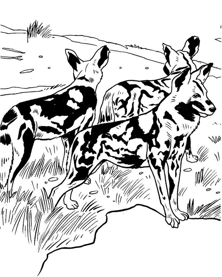 Kolorowanki dzikie psy