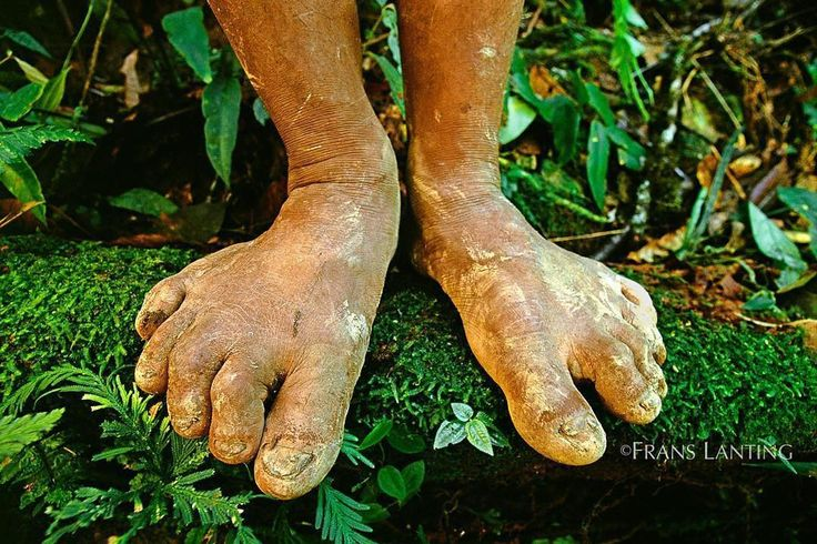 Photo by @franslanting On an expedition in the upper Amazon Basin of Peru I was amazed by the bare feet of an Ashaninka Indian who guided me through a tropical forest. I had been looking for an image that would symbolize how the bodies of humans are shaped by nature. This mans feet looked quite different from mine and it made me realize how easily human limbs can change shape under the pressures of a natural environment. Repost via @natgeo  @thephotosociety @natgeotravel @natgeocreative…