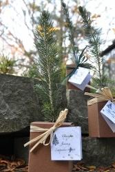 Tree Seedlings in a Box Wedding Favors