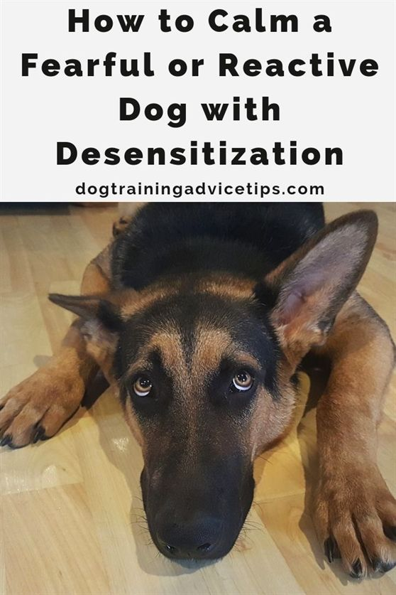 Sanity Saving Tips For Training Your Dog Today Reactive Dog