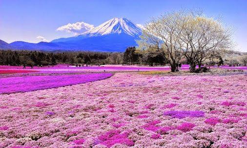 Susan Jones - Google+ #japan #amazing